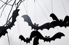 Halloween and a lot of bats Stock Photo
