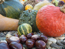Halloween mood in the garden. Pumpkins and chestnuts in the autumn garden Royalty Free Stock Photography