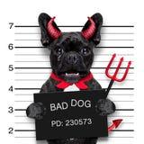 Halloween mugshot dog stock image