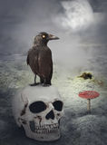 Halloween mystical background with crow on skull Stock Images