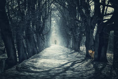 Halloween mystical background with dark forest. And road Royalty Free Stock Photo
