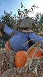 Halloween in Netherlands. Pumpkin farm in Netherlands Stock Images
