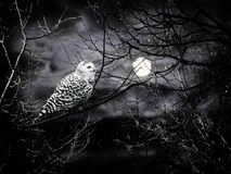 Halloween night. Theme with moon and owl against cloudy dark sky Royalty Free Stock Images