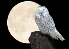 Halloween night. Theme with moon and owl Stock Photography