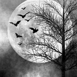 Halloween night background. Halloween background. Bats flying in the night with a full moon in the background Royalty Free Stock Images