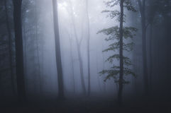 Halloween night in mysterious forest with fog Royalty Free Stock Photography