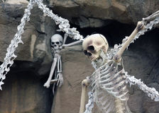 Halloween Novelty Skeleton in the Spooky Graveyard Royalty Free Stock Photo