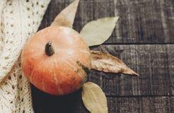Halloween o endecha del plano de la caída de la tarjeta de felicitación del concepto de la acción de gracias B Imágenes de archivo libres de regalías