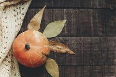 Halloween o endecha del plano de la caída de la tarjeta de felicitación del concepto de la acción de gracias B Imagen de archivo