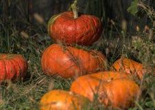 halloween Orange pumpalögn på gräset arkivbilder