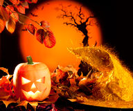Halloween orange pumpkin on autumn leaves Stock Images