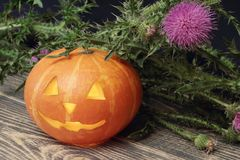 Halloween. Orange pumpkin with lit candle inside and sprig of thistle. Black wooden background royalty free stock photo
