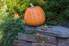 Halloween orange pumpkins and colorful candy Stock Photos