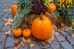 Halloween ornament at autumn Royalty Free Stock Images