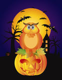 Halloween Owl Pumpkin and Bats Illustration Royalty Free Stock Photography