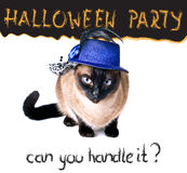 Halloween party banner funny edgy jumpy Siamese Hilarious Cat Stock Image