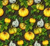 Halloween patterns. kurbis pumpkin seamless design. Halloween pattern with illustrated pumpkins. Botanical illustration Royalty Free Stock Image