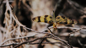 The Halloween Pennant Stock Photo