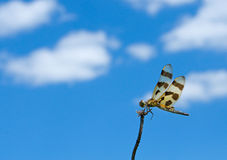 Halloween Pennant Dragonfly Royalty Free Stock Photography