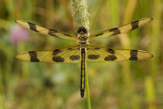 Halloween Pennant Dragonfly Royalty Free Stock Images