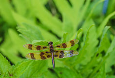Halloween Pennant Dragonfly Stock Images