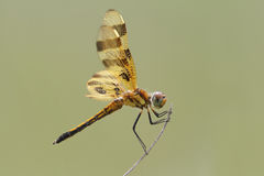 Halloween Pennant Stock Images