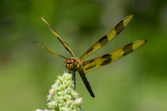 Halloween Pennant Royalty Free Stock Photography