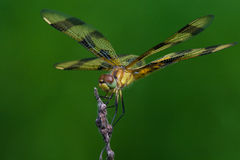 Halloween Pennant Stock Photo
