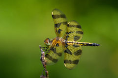 Halloween Pennant Royalty Free Stock Images