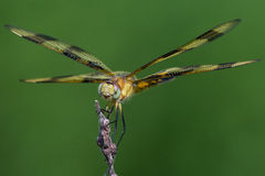 Halloween Pennant Stock Photography