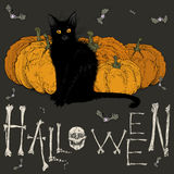 Halloween picture with a black cat . Stock Photography