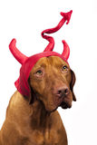 Halloween pies zdjęcie royalty free
