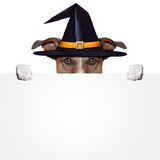 Halloween placeholder banner dog Stock Photography