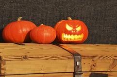 Halloween-pompoenen op de houten koffer royalty-vrije stock afbeeldingen