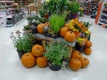 Halloween-Pompoenenvertoning in een Winkel Stock Afbeeldingen