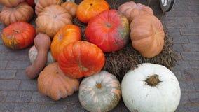 Halloween preparation. Red-orange pumpkins on  grey road Stock Images