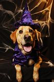 halloween psi czarownik Fotografia Royalty Free