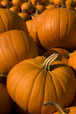 Halloween pumkins ready for carving Royalty Free Stock Photo