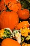 halloween pumpa Royaltyfri Fotografi