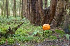 Halloween pumpa sörjer in skogen royaltyfria bilder