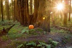 Halloween pumpa sörjer in skogen arkivfoton