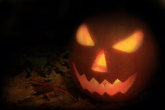 Halloween pumpkin. On the autumn leaves Royalty Free Stock Image