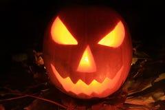Halloween pumpkin. On the autumn leaves stock image