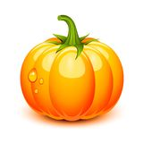 Halloween pumpkin. In a glossy style royalty free illustration