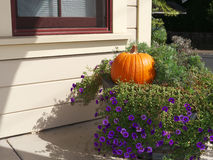 Halloween pumpkin. Nestled in foliage and purple flowers Stock Photography