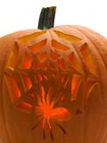 Halloween Pumpkin. Pumpkin with a spider and web carved in it Royalty Free Stock Photography