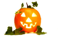 Halloween pumpkin. On white background Stock Images