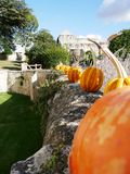 Halloween Pumpkin Alignment at Rivau Castle in Touraine. France stock photos