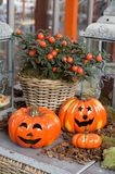 Halloween Pumpkin arrangement Stock Photos
