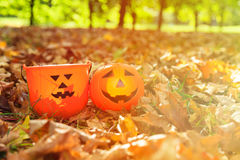 Halloween pumpkin in autumn fall Royalty Free Stock Image